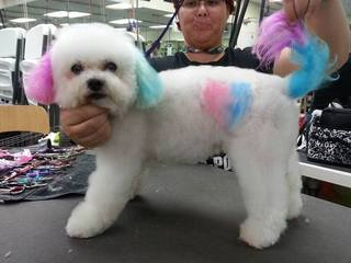 Merryfield School of Pet Grooming