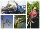 Profile Photos of All Counties Tree Surgery