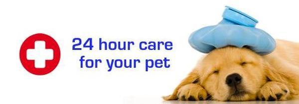 Profile Photos of Eastside Veterinary Emergency & Specialists 10 Newcastle Street, St Rose Bay - Photo 1 of 3