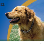 Golden Paws Grooming & Pet Services