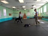 Happy Dogs Boarding and Training 1049 Chews Landing Rd