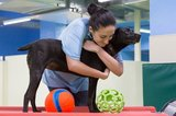 Profile Photos of Fido's Retreat Doggy Daycare
