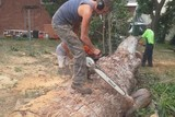 Profile Photos of Tall Timbers Tree Services