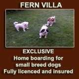 Profile Photos of Fern Villa: EXCLUSIVE home boarding for Small dogs