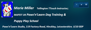 Puppy Training Classes in Bedworth & Nuneaton - Paws n Learn, UK