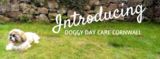 Profile Photos of Doggy Daycare Cornwall