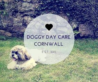 Doggy Daycare Cornwall