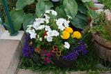 We love springtime flowers. Harbour Tide Inn ~ Bed & Breakfast 725 Main Street