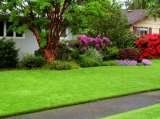 Amazing Lawns of Amazing Lawns