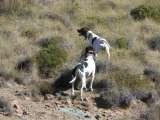 Profile Photos of Karoo Wingshooting