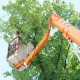 East Greenwich Tree Service Inc. 29 Meadowbrook Rd.