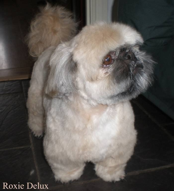 2 Of 11 Photos Pictures View Roxie Delux Dog Grooming Birmingham