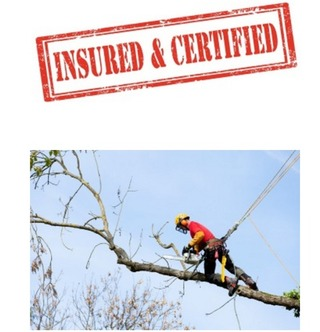 Sarasota Tree Care & Services