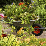 Profile Photos of Garden Care Services