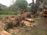 Pricelists of Pro Cut Tree Removal Melbourne