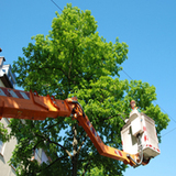 Profile Photos of Brothers Tree Service