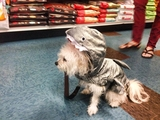Fang & Feather - Kenton Neighborhood Pet Supply Fang! Pet and Garden Supply 3131 N Lombard St