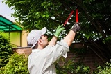 Professional gardener pruning a tree Tree Service Columbus Ohio 1391 W 5th Ave Suite 401B