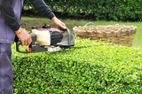Gardener trimming hedge with trimmer machine in the garden Tree Service Columbus Ohio 1391 W 5th Ave Suite 401B