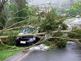 Pricelists of Erie Tree Trimmers