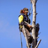 Branching Out Oxfordshire's Trees and Hedge Expert