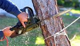 Pricelists of Tree Service Spokane