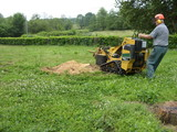 New Album of David Cropper stump grinding and jungle busting services.