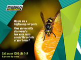 Profile Photos of Protech Pest Control