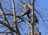 Milton Tree Care, Milton