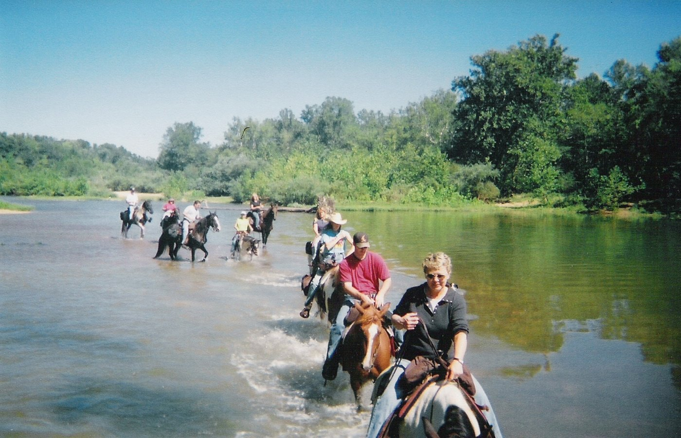 an introduction to the nature of missouri fox trotter Dreamhorsecom black missouri fox trotter horse gelding, the ultimate trail horse for family in washington.