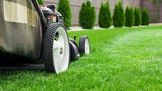 Lawn Care Cape Coral FL
