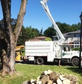 Profile Photos of Timberlane Tree Service