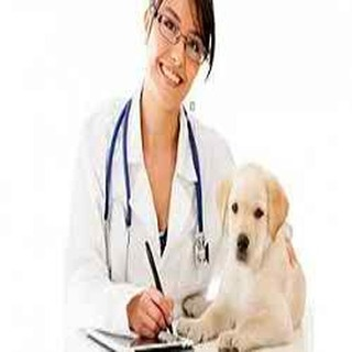 Central Whidbey Veterinary Services