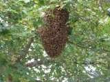 Profile Photos of Wasp Nest Removal Croydon