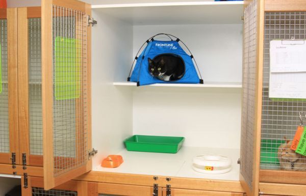 Profile Photos of North Balwyn Veterinary Clinic - Vaccinations, Training & Surgeon 288 Doncaster Road - Photo 7 of 7