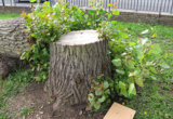 Profile Photos of Madison Stump Removal and Tree Services