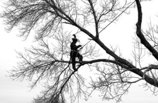 Madison Stump Removal and Tree Services