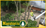 Tree Cutting Service From Our Bucket Truck