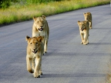 Kruger Park and Panorama Route Tour - bring your camera!