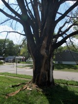 Tree trimming Evansville IN, Tree removal Evansville IN, Stump removal Evansville IN, Brush removal Evansville IN, Emergency tree service Evansville IN, Storm cleanup Evansville IN, Commercial  Evansville IN, Residential Evansville IN