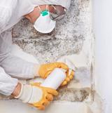 My Mold Removal NYC, New York