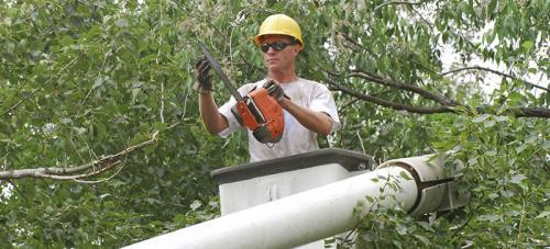 Profile Photos of All Around Tree Care 10712 West State Highway 36 - Photo 1 of 4