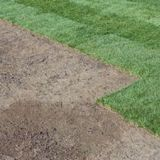 Profile Photos of Sunny Slope Sod Farm, LLC