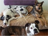 Profile Photos of Canine Design Salon and Country Club