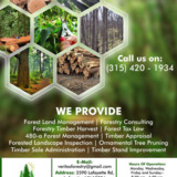 Forestry Timber Harvest Management Companies Lafayette