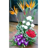New Album of Mobile Flower Pune:Online Flower Delivery in Pune