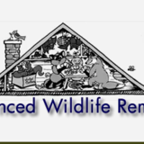 Advanced Wildlife Removal