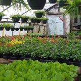 Profile Photos of Leisuretime Greenhouses