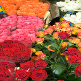Profile Photos of The Flower Market