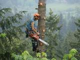 Profile Photos of Aerial Tree Service